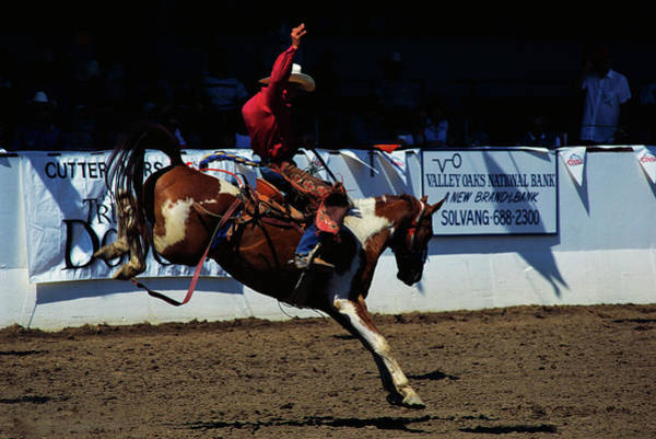 Wall Art - Photograph - Saddle Bronc Rider by Panoramic Images