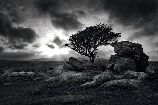 Saddle Photograph - Saddle Tor, Dartmoor, Lone Tree And Tor by David Clapp