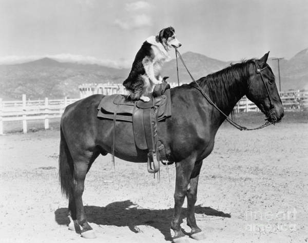 Wall Art - Photograph - Saddle Up by Everett Collection