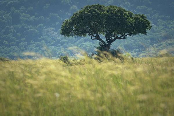 Wall Art - Photograph - Safari Tree by Christian Heeb