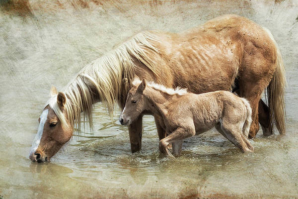 Photograph - Safe By Mother's Side - South Steens Mustangs by Belinda Greb