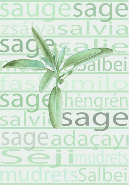 Wall Art - Digital Art - Sage by A.v. Art