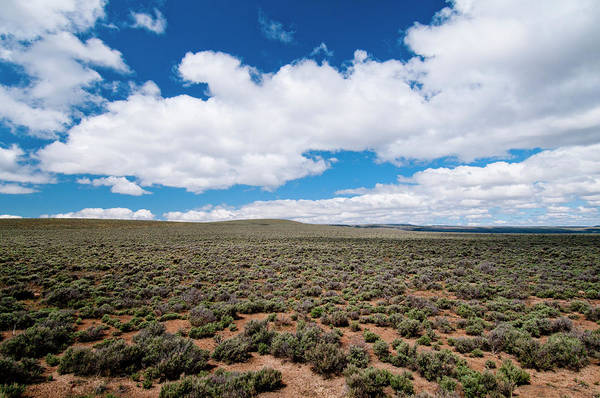 Wall Art - Photograph - Sagebrush Sea In Harney County, Se by William Mullins
