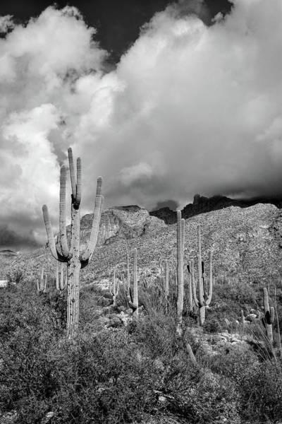 Photograph - Saguaro Black And White Drama by Chance Kafka