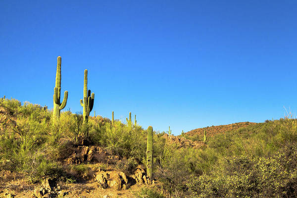 Photograph - Saguaro Cactus Patch by SR Green