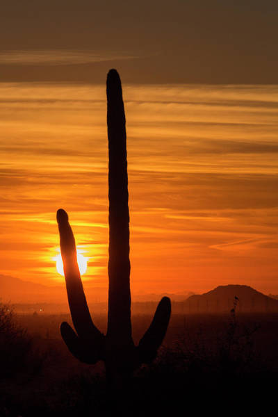 Wall Art - Photograph - Saguaro Cactus Stands Tall by Brenda Tharp