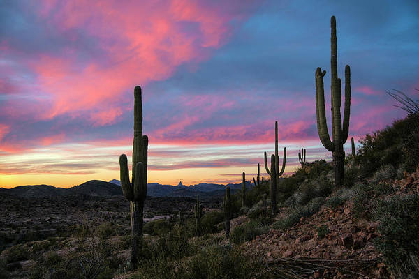 Photograph - Saguaro Cactus Sunset Near Superior Arizona by Dave Dilli