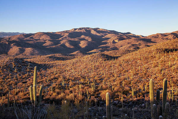 Photograph - Saguaro Hills by Lon Dittrick