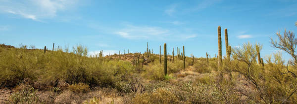 Photograph - Saguaro Hillside by Mark Duehmig