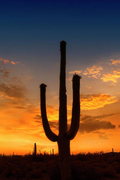 Wall Art - Photograph - Saguaro National Park Bright Sunset by Melanie Viola