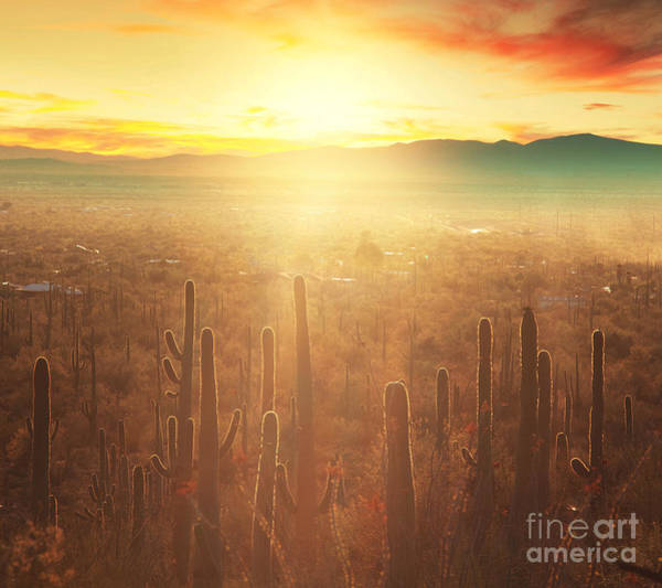 Wall Art - Photograph - Saguaro National Park by Galyna Andrushko