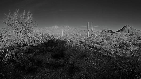 Photograph - Saguaro National Park West Black And White Panorama  by Chance Kafka