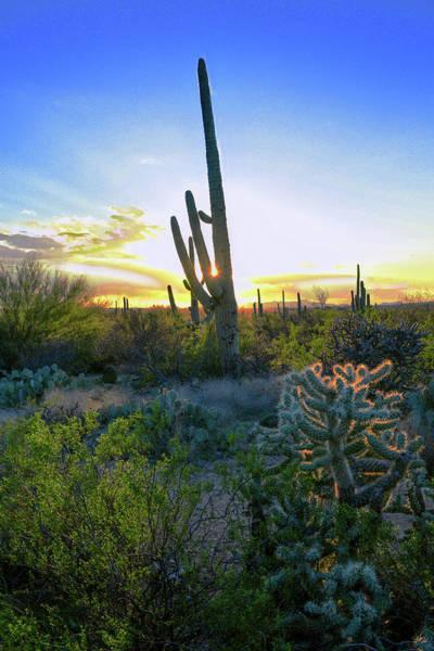 Photograph - Saguaro Radiance by Chance Kafka