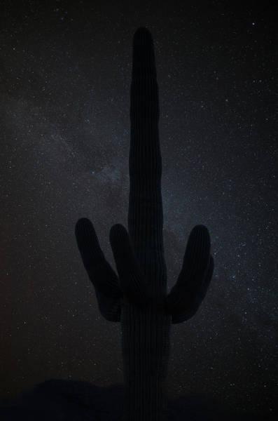 Wall Art - Photograph - Saguaro Stars by Steve Gadomski