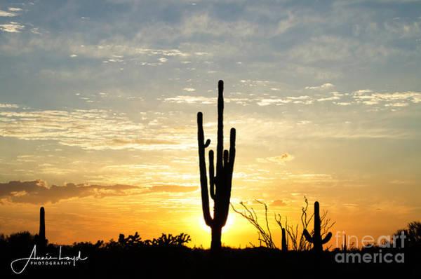 Wall Art - Photograph - Saguaro Sunset by Ann Loyd