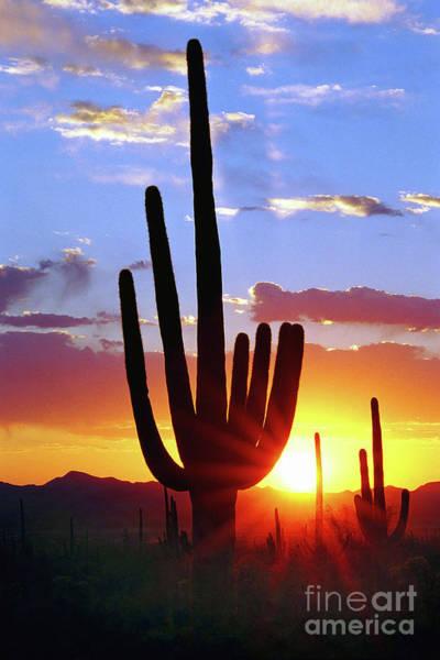 Wall Art - Photograph - Saguaro Sunset by Douglas Taylor
