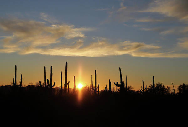 Photograph - Saguaro Sunset by Jean Clark