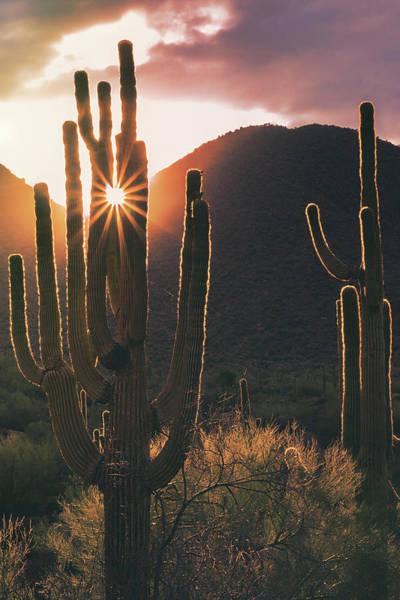Wall Art - Photograph - Saguaro Sunshine  by Saija Lehtonen
