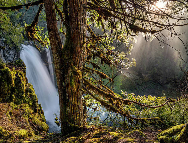 Photograph - Sahalie Falls Morning by Leland D Howard