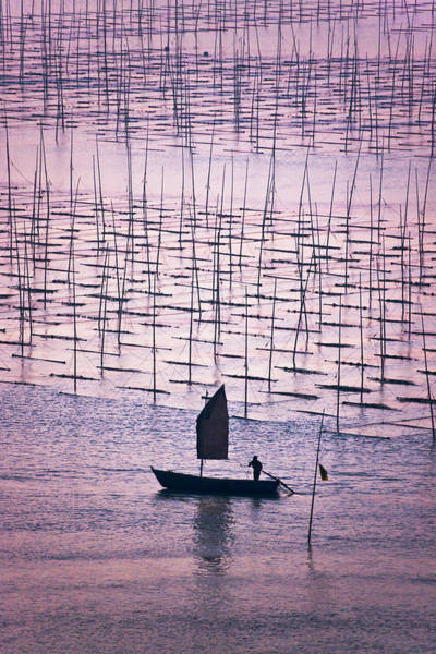 Seaweed Photograph - Sailboat Sailing Through Bamboo Sticks by Keren Su