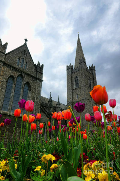 Photograph - Saint Patrick Cathedral Spring by Olivier Le Queinec