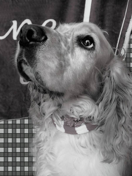 Digital Art - 	Saint Shaggy Art Photograph 39 by Miss Pet Sitter