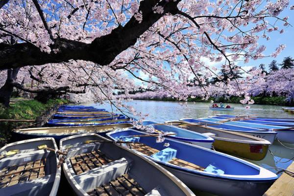 Wall Art - Photograph - Sakura Boats Hirosaki Japan by Photo By Glenn Waters In Japan