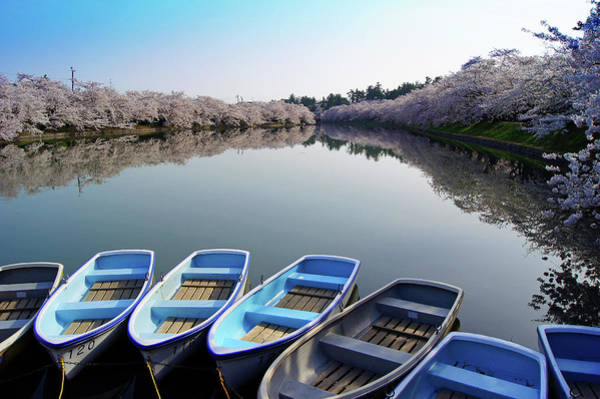 In Focus Wall Art - Photograph - Sakura by The Landscape Of Regional Cities In Japan.