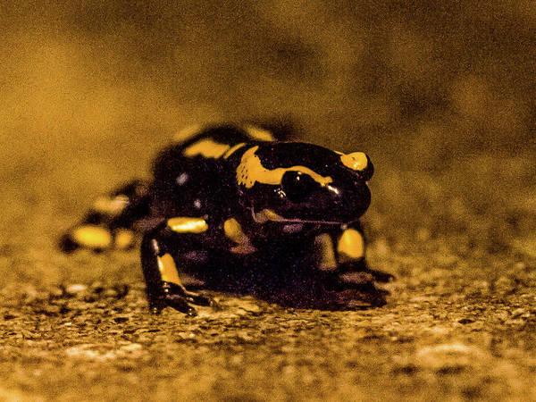 Photograph - Salamander 1 by Jorg Becker