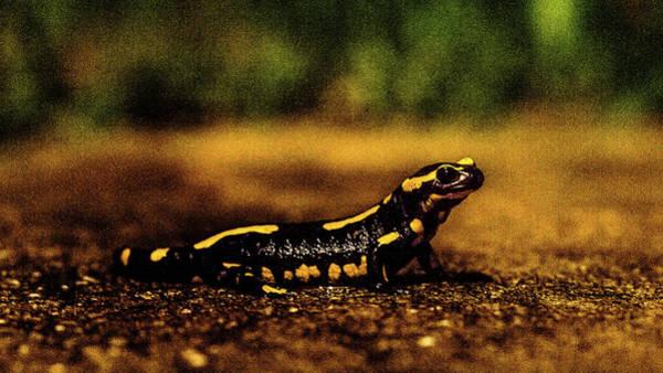 Photograph - Salamander 2 by Jorg Becker