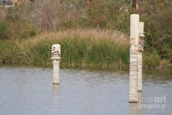 Photograph - Salt Covered Runes In Salton Sea by Colleen Cornelius