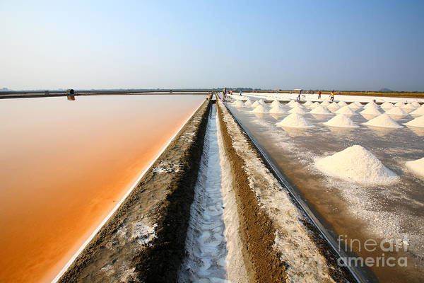 Mineral Wall Art - Photograph - Salt Fields At Phetchaburi, Thailand by Isarescheewin