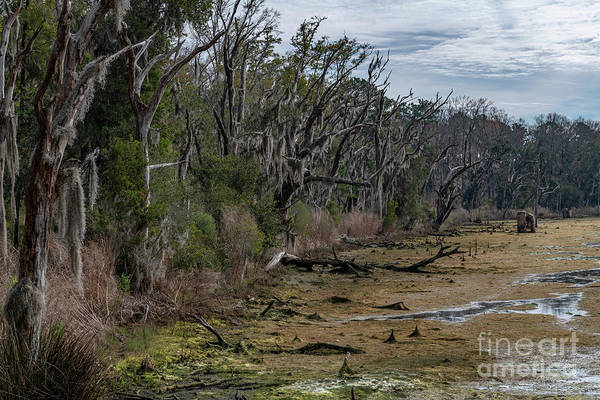 Photograph - Salt Marsh - Ace Basin by Dale Powell