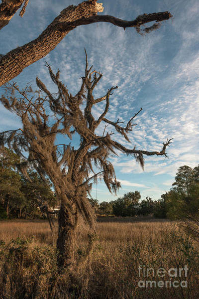 Photograph - Salt Marsh - Lowcountry Of Charleston by Dale Powell