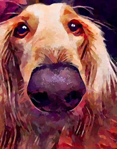 Wall Art - Painting - Saluki 3 by Chris Butler