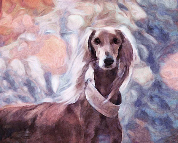 Mixed Media - Saluki by Susan Maxwell Schmidt