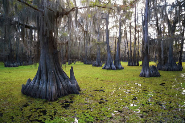 Wall Art - Photograph - Salvinia Floor Covered Forest by Lana Trussell