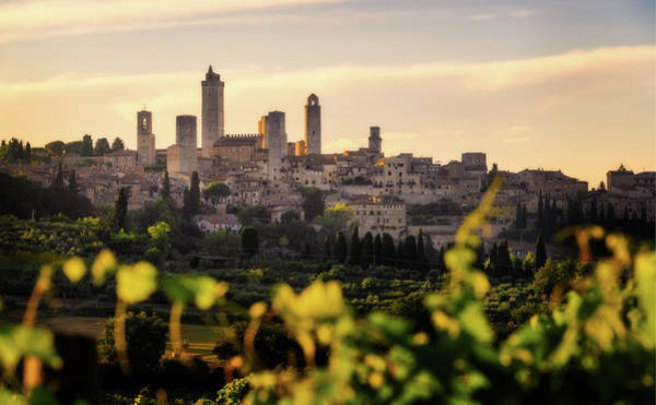Photograph - San Gimignano And The Vineyards - Italy by Nico Trinkhaus