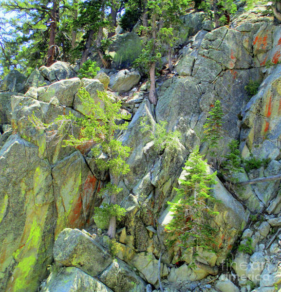Aerial Tramway Wall Art - Photograph - San Jacinto Mountains 3 by Randall Weidner