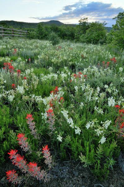 Photograph - San Juan Parkway Wildflower Garden by Ray Mathis