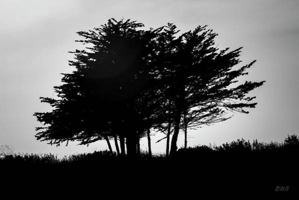 Photograph - San Simeon Vi Bw by David Gordon