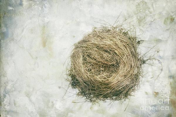 Empty Nest Wall Art - Photograph - Sanctuary by Alison Sherrow I AgedPage