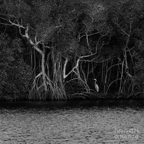 Great Blue Heron Wall Art - Photograph - Sanctuary by Marvin Spates