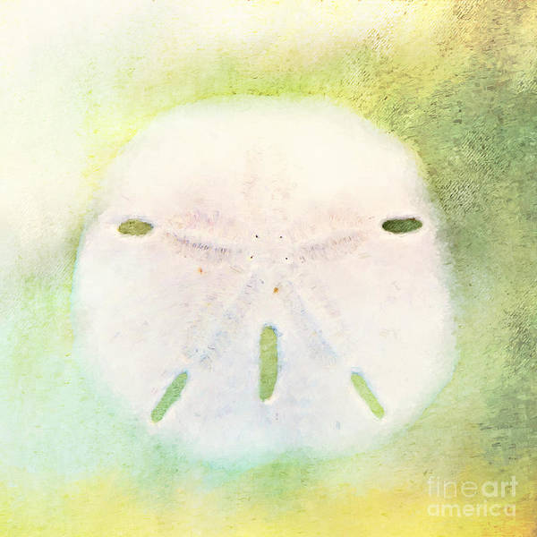 Photograph - Sand Dollar by Pam  Holdsworth