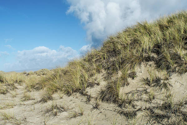 Wall Art - Photograph - Sand Dune Day by Bonnie Bruno