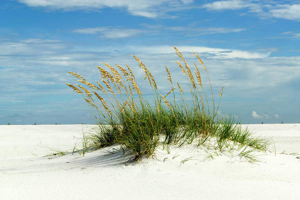 Pensacola Photograph - Sand Dune, Santa Rosa Island by Michael Smith Photography/studio One Pensacola