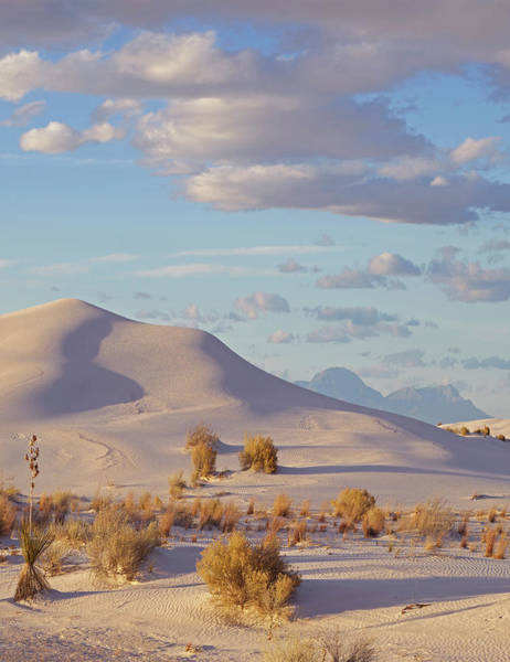 Photograph - Sand Dune, White Sands Nm, New Mexico by