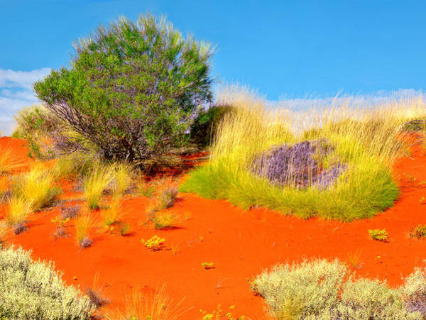 Photograph - Sand Dunes #4 Of The Red Centre - Australia by Lexa Harpell