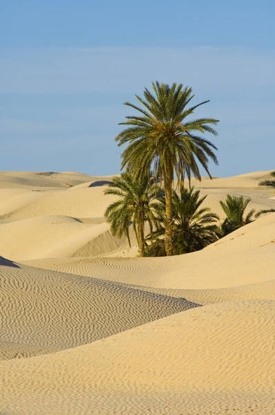 Tunisia Photograph - Sand Dunes Around The Old Town by Maremagnum