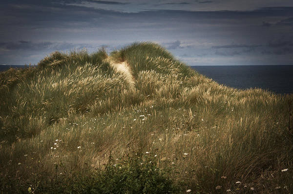 Photograph - Sand Dunes In Cornwall by David Resnikoff